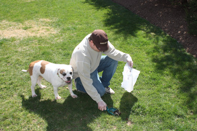 Dog Waste Removal - Why It Is Important And How To Do It